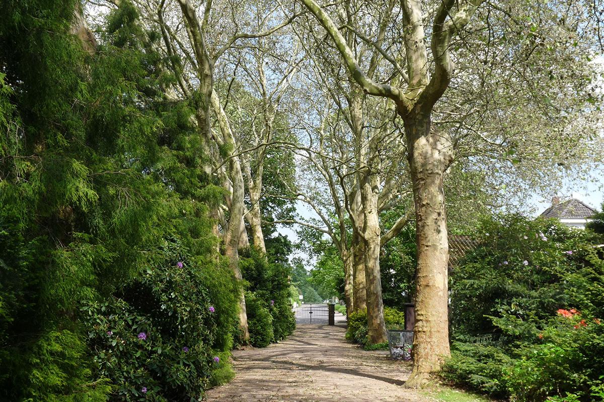 Friedhof Altstadt Schwarzer Weg – Hauptweg